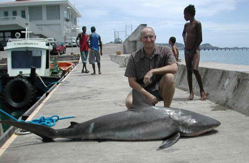 Bull Shark 185lb